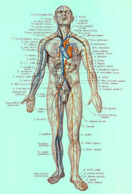 развития диагностичекого процесса основано на поорганном и посистемном изучении организма человека путём...