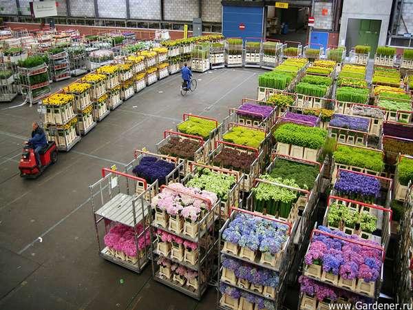 Торговля Цветы комнатные: Оптовая продажа цветов онлайн.