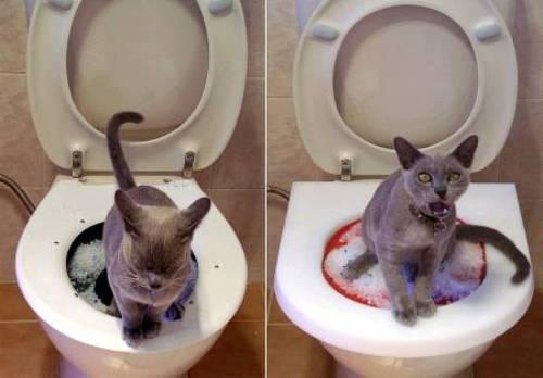 older persian cat health problems
