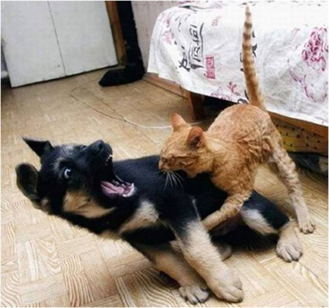 Cat randomly attacks me