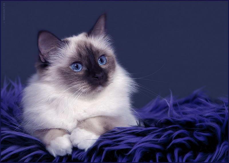 Котики картинки красивые анимации