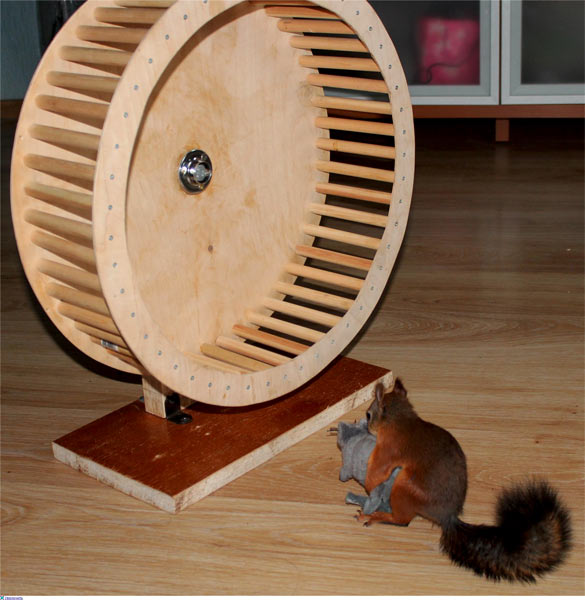 Фото колесо для хомяка своими руками
