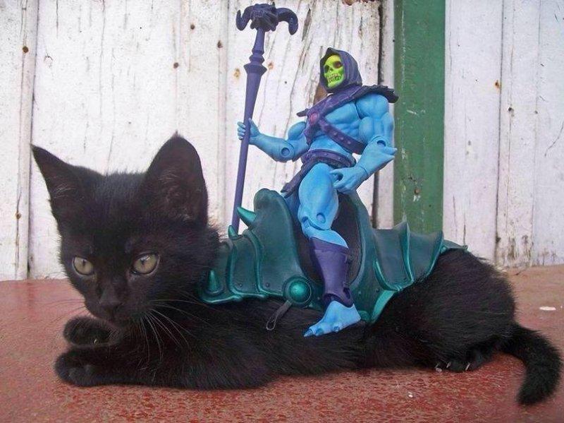картинки коты апокалипсиса для фотографий недорого