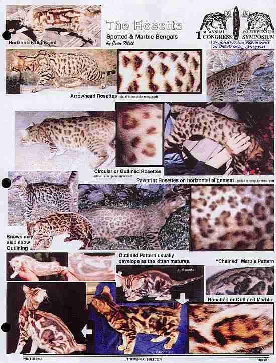 Окрасы бенгальских кошек таблица с фото